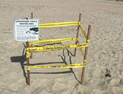 Sea Turtle Nesting Season is Here!