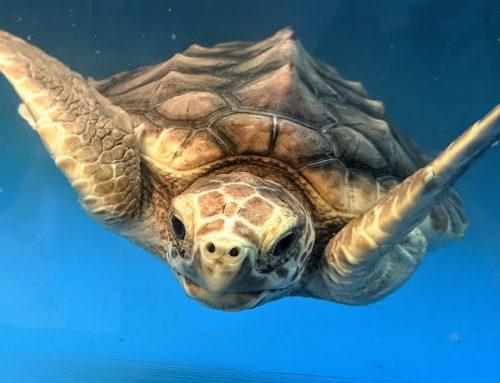 2021 Sea Turtle Nesting Season Updates