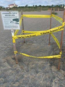 2021 Sea Turtle Nest #9