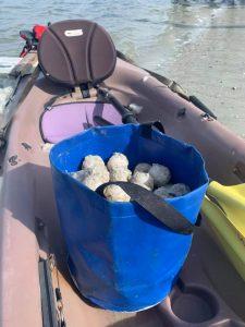 2021 Sea Turtle Nest #11