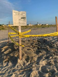2021 Sea Turtle Possible Nest #2