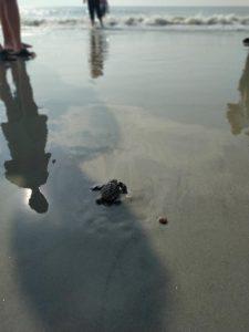 2021 Sea Turtle Hatchling